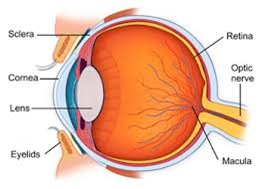 Natural anatomy image of the eye